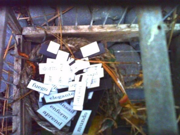Fotografía de palabras dentro de una jaula para pájaros